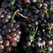 Black Grapes 1kg